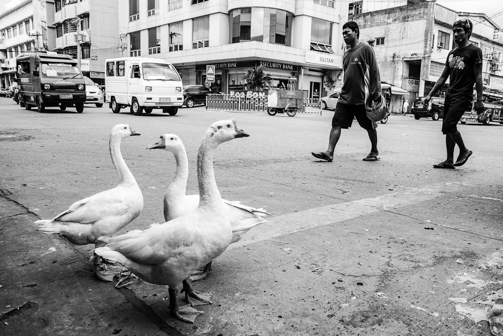 geese for sale on a street corner